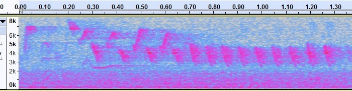 How to Identify a Bird from an AudioRecording
